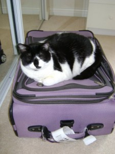 Bailey on a suitcase