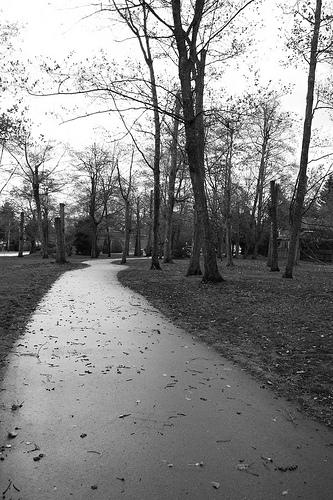 Path by Chloe Woodin