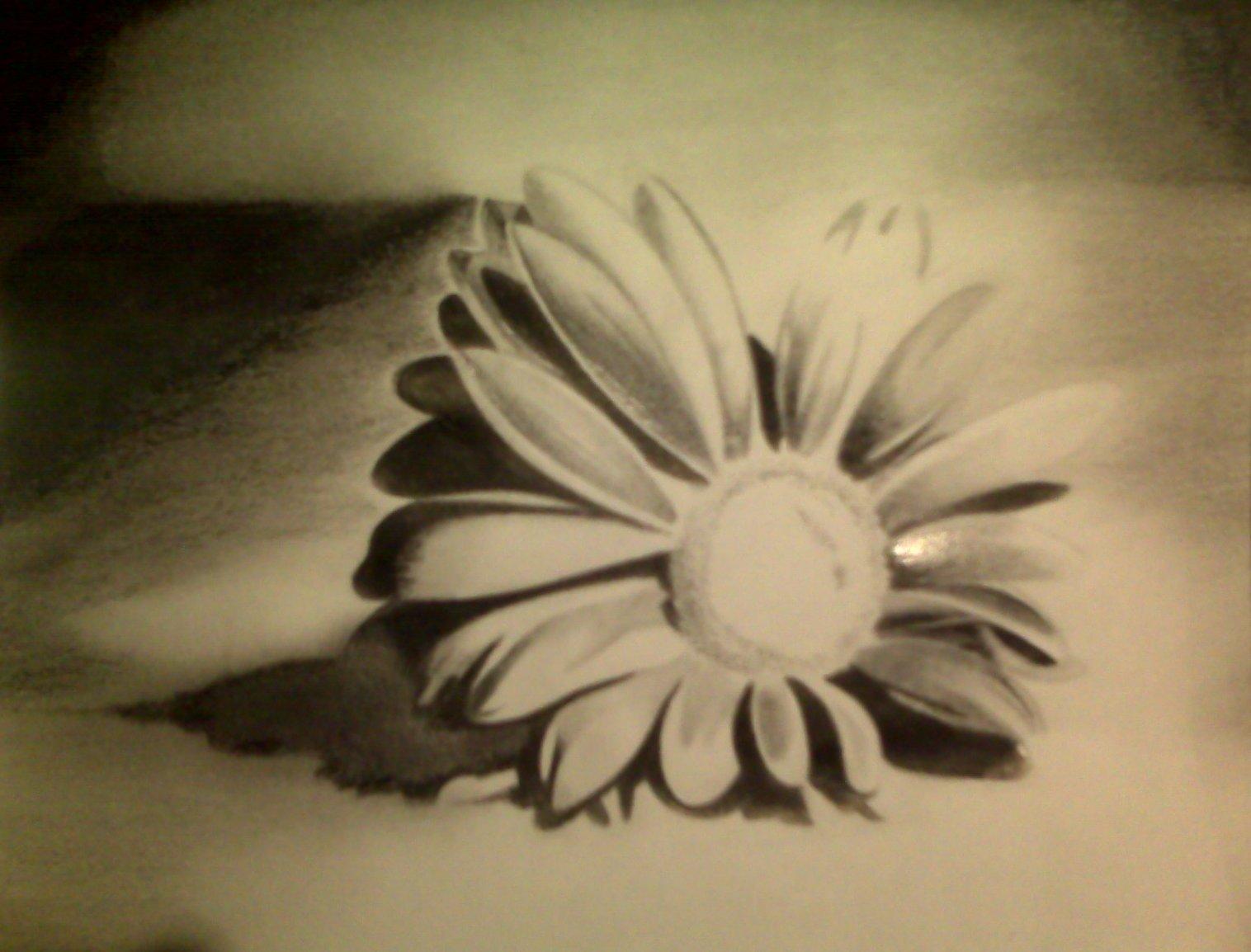 Chloe's Flower - Pencil Sketch