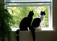 Cats in the window - East Ridge Animal Hospital